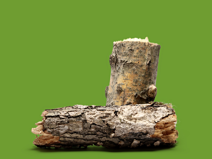Logs and stumps - recyclable - van der Linde Recycling